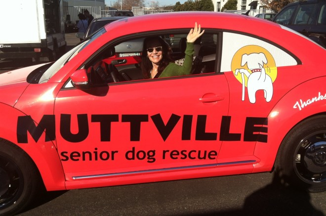 muttville car wrap-07